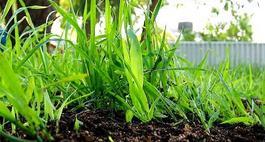 Ekologiczne i naturalne nawozy do warzyw i kwiatów