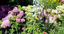 Letnie kwiaty rabatowe