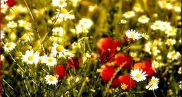 Łąka kwiatowa w ogrodzie