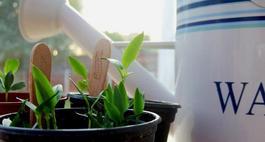 Podlewanie roślin doniczkowych podczas urlopu