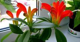 Zwisające kwiaty doniczkowe