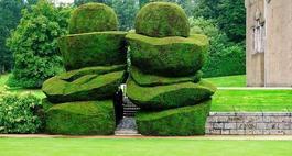 Rośliny na żywopłot