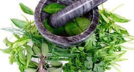 Rośliny lecznicze w ogrodzie