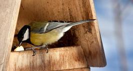 Budowa karmnika dla ptaków