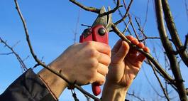 Przycinanie krzewów