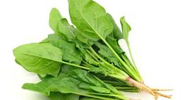 Uprawa szpinaku - Spinacia oleracea