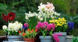 Znaczenie kwiatów - kolory kwiatów i ich symbolika