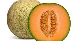 Melony uprawa i pielęgnacja