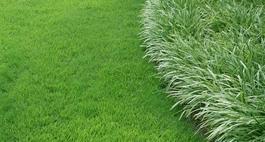 Trawy ozdobne - kilka uwag o projektowaniu