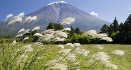 Miskant - trawy ozdobne w ogrodzie