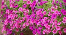 Różowe kwiaty - zestawienie