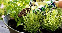 Powrót zieleni na balkony i tarasy