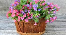 Jakie kwiaty sadzimy jesienią?