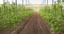 Podkładki jabłoni