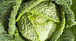 Kapusta włoska – uprawa, odmiany i właściwości