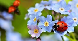 Biedronka – pożyteczny owad