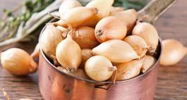 Cebula zwyczajna – zasady uprawy i najciekawsze odmiany