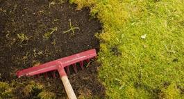 Mech na trawniku – skuteczne zwalczanie