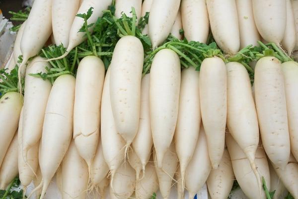 Biała rzodkiew