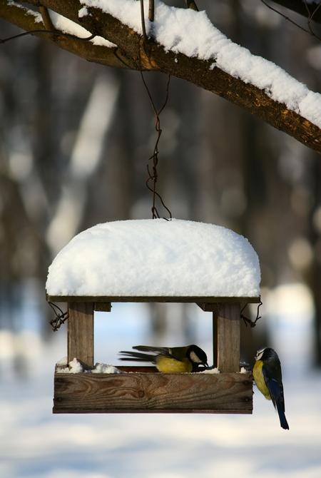 Ptaki w ogrodzie zimą