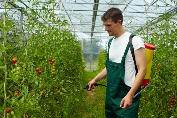 Jak zbudować szklarnię - szklarnia w ogrodzie