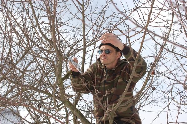Cięcie jabłoni wczesną wiosną