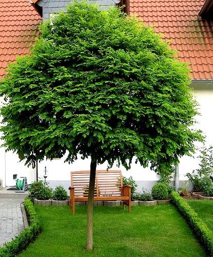 Kuliste drzewa w ogrodzie