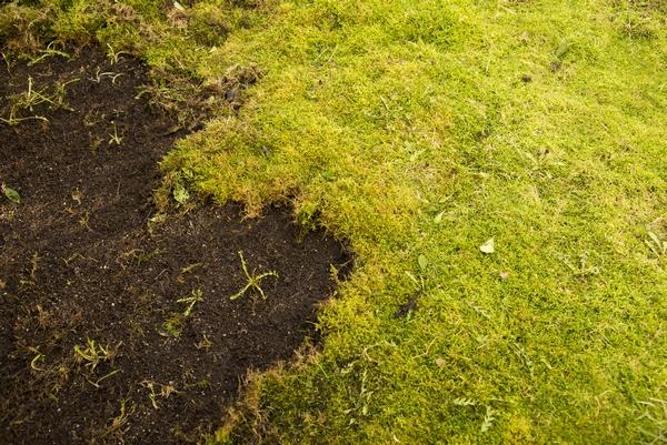 Mech w trawniku