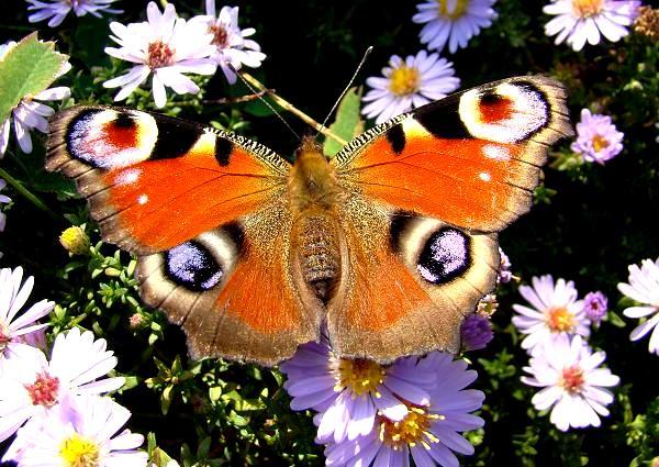Motyle w ogrodzie
