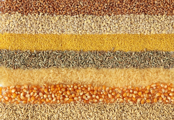 Nasiona - zbiór i przechowywanie
