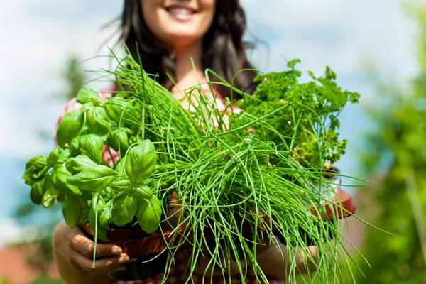 Ogród ziołowy - zioła w ogrodzie