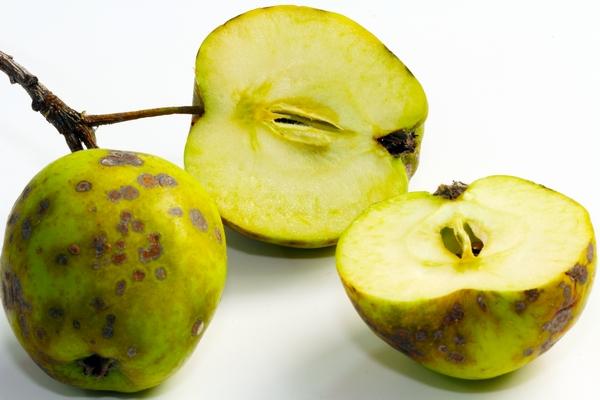 Parch jabłoni – zwalczanie