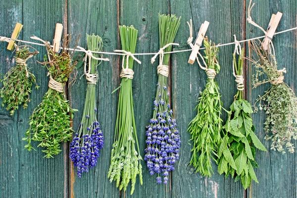 Rośliny i kwiaty na suche bukiety - suszenie kwiatów