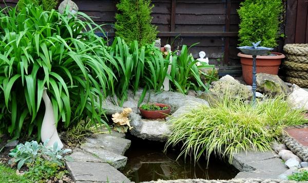 Trawy ozdobne w ogrodzie.