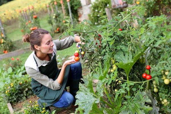 Warzywnik – ogród warzywny