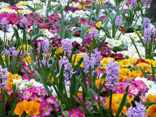 Wiosenne rośliny