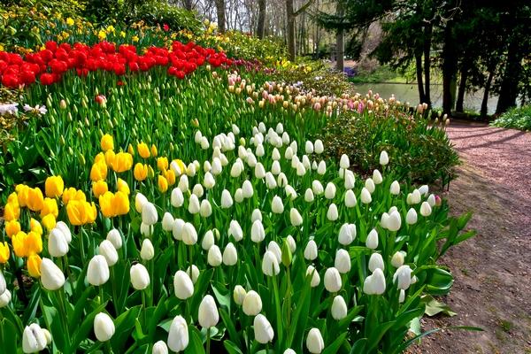 Wiosenne rośliny - tulipany