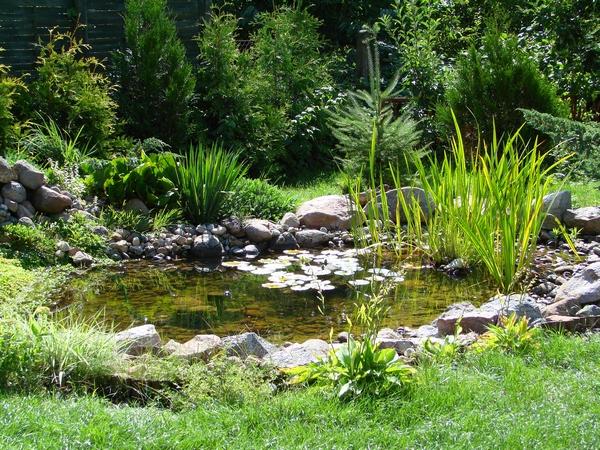 Budowa oczka wodnego for Natural garden pond design