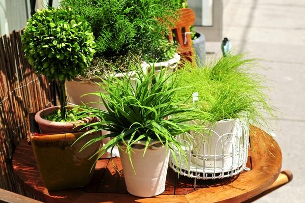 Zielone kwiaty for Sala girasol