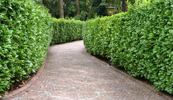 Ywop ot naturalna ciana ochronna w naszych ogrodach for Matas de jardin