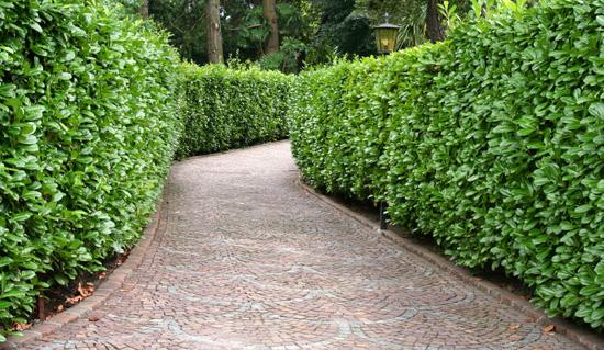 Ywop ot szybko rosn cy for Arbustos para jardin con flores