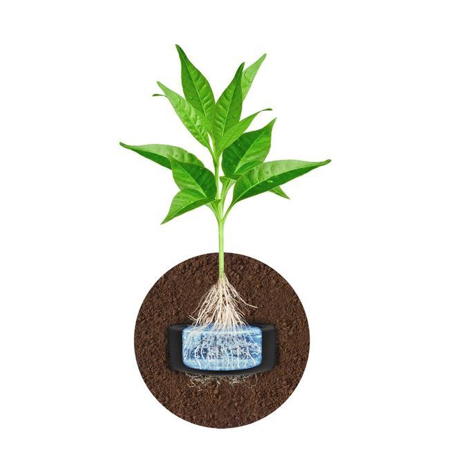 Przekrój rośliny zasadzonej na HYDROBOXIE bezpośrednio w glebie