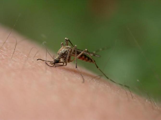 Rośliny odstraszające komary