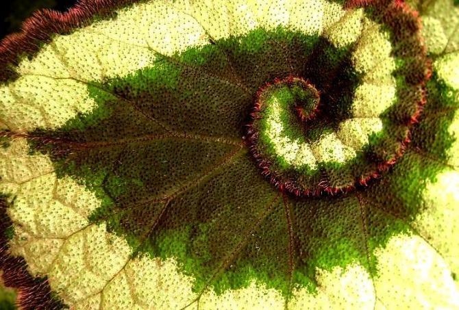 Rozmnażanie Kwiatów Czyli Jak Rozmnażamy Kwiaty Doniczkowe