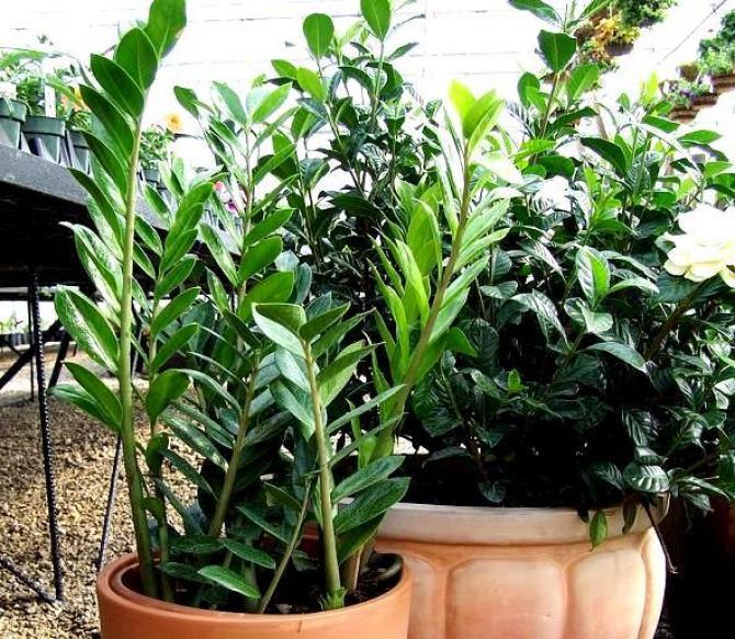 Kwiaty doniczkowe w zimie  Jak pielęgnować rośliny w okresie jesienno-zimowym?
