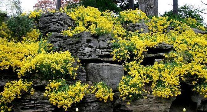 Rośliny na skalniak  jakie rośliny na skalniak