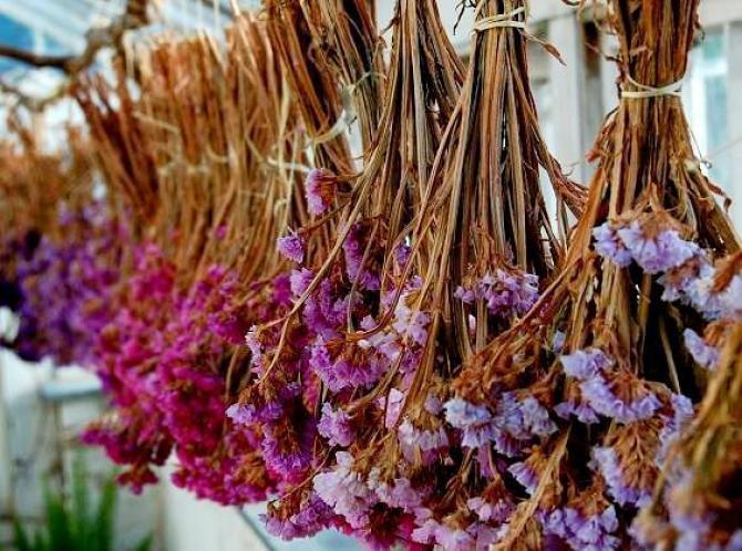 Suszenie kwiatów