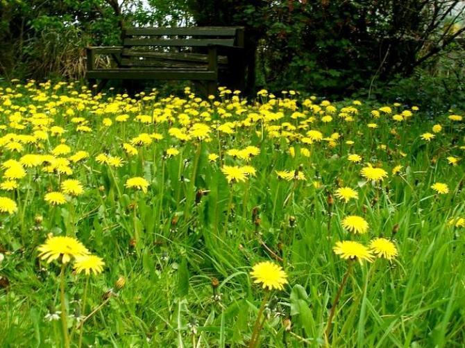 Trawnik na wiosnę