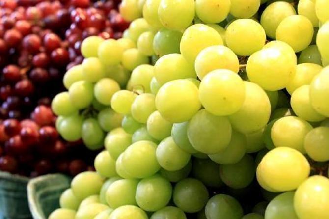 Odmiany winogron i winorośli