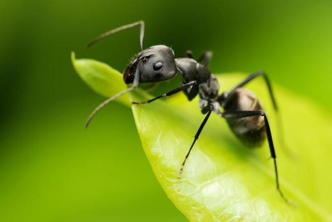 Mrówki W Domu Jak Pozbyć Się Mrówek